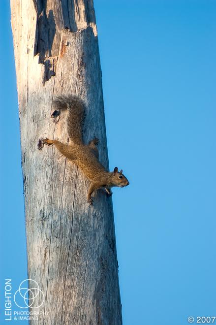 GreySquirrel102