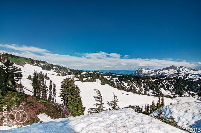 Alpine Meadows in Summer