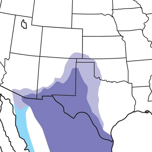 Chihuahuan-Raven_map