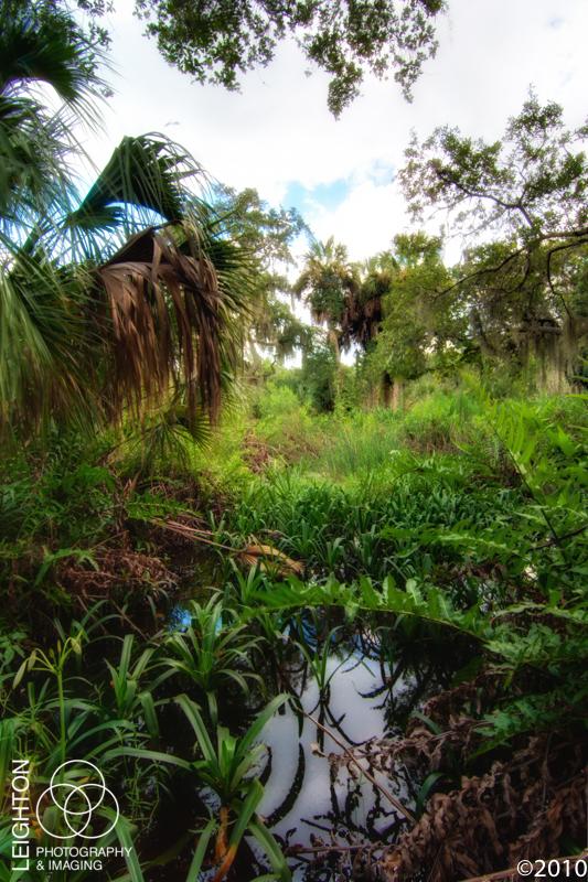 Wetlands of Terra Ceia Preserve